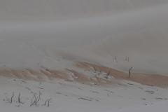 Wild dune
