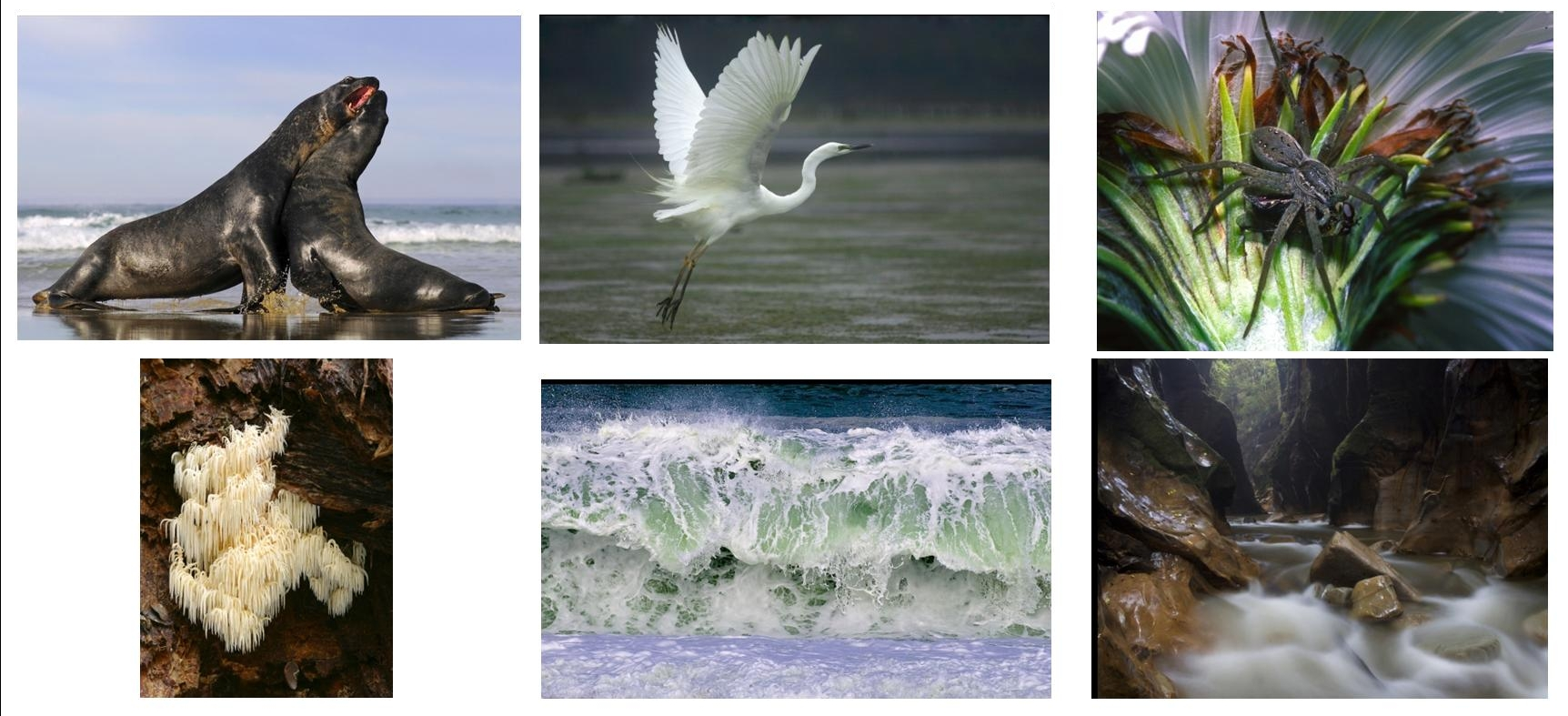 Nature Photography Society