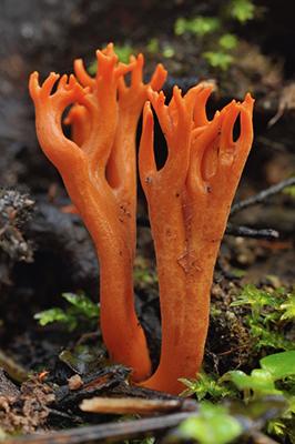 West Coast Fungi Forage with Jane
