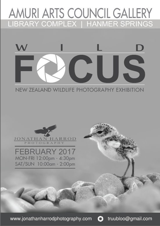 Jonathan Harrod: NZ Wildlife Photography