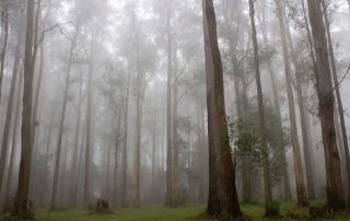 Yarra-Valley-fog
