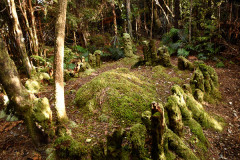 Sue Blair: Richard Henry's kiwi enclosure, Pigeon Island