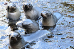 Ken Muscroft -Taylor: Seal pups