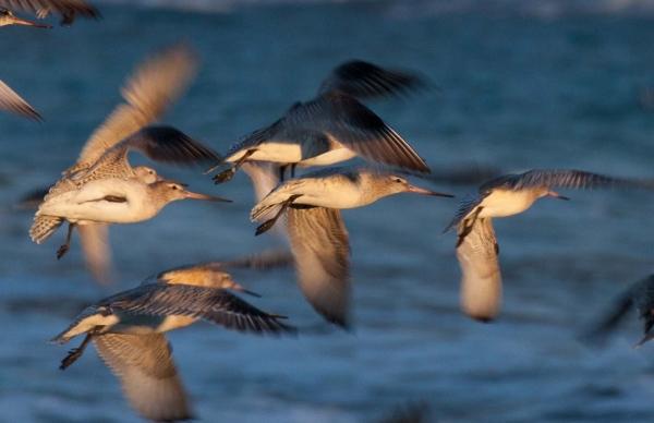 Kath Varcoe: fly to Alaska