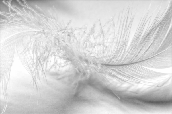 Barbara Burry: Frenzied Feather
