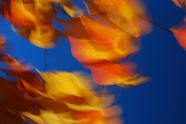 Katherine McCusker: autumn flight