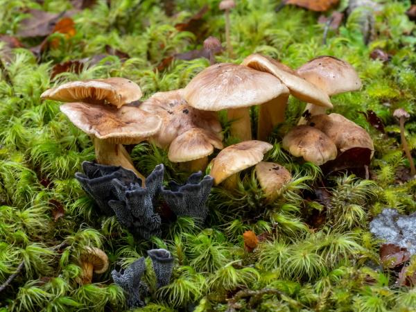 James Thompson: Fungi