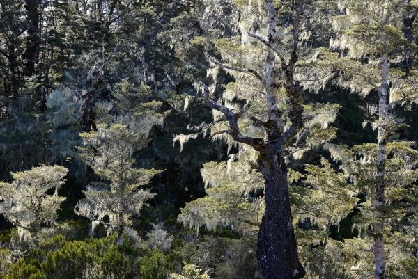 Peter McCusker: Lichen