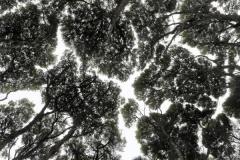 Canopy jigsaw