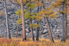 Larch and Moraine