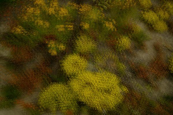 A-09-Otago-wild-flowers