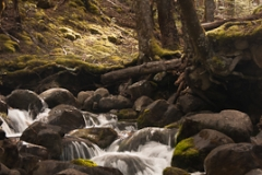 Freehold Creek Beech Forest