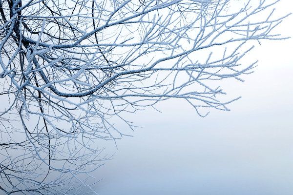Hoar Frost on branches, Lake Pearson