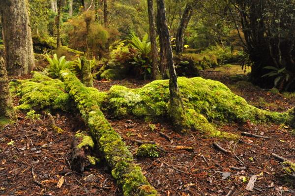 Jane Coulter: Moss Garden