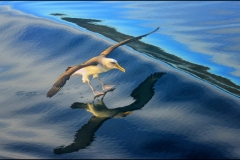 Yvonne Marshall: Bird in flight
