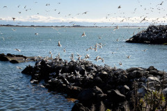 Sue Blair:Terns at Lifeboat launching area