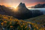 William Patino: New Zealand Wilderness