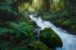 William Patino: Fiordland Forest