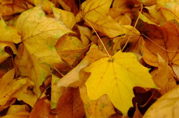Remco Baars: Autumn