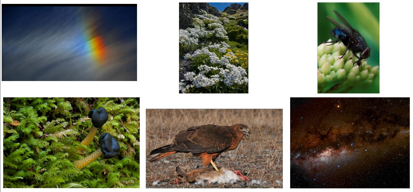Christchurch Photographic Society