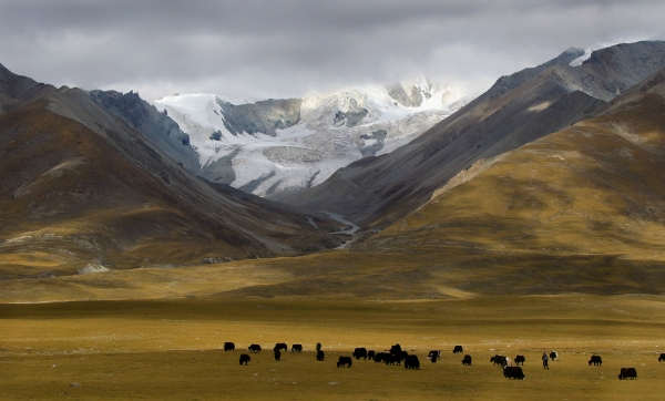 Trish Brown: Glacier and Yaks in Tibet