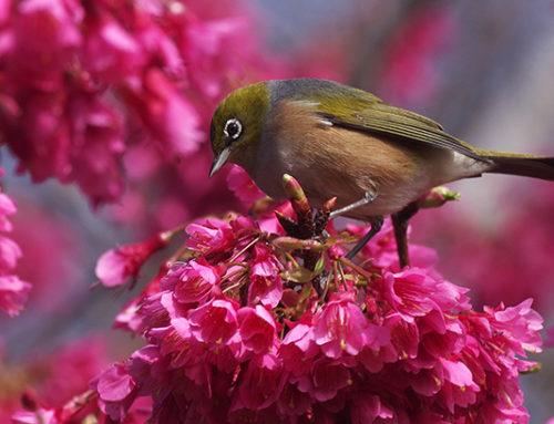 Spring in the Gardens Registration