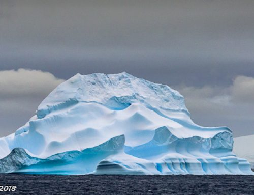 Southern Ocean: Barry Dench