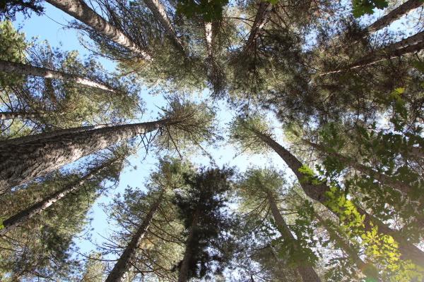 Kath: Hanmer Forest