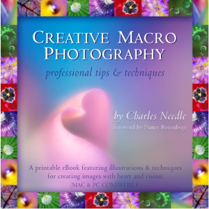 Charles Needle: Creative Macro