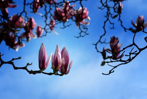 Maureen Pierre: Spring