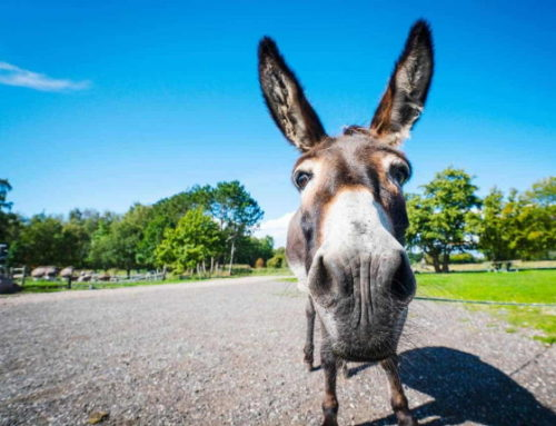 Donkey Visit – Wednesday 17 February