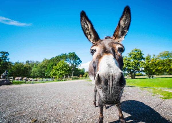 donkey from StoryTeller Travel