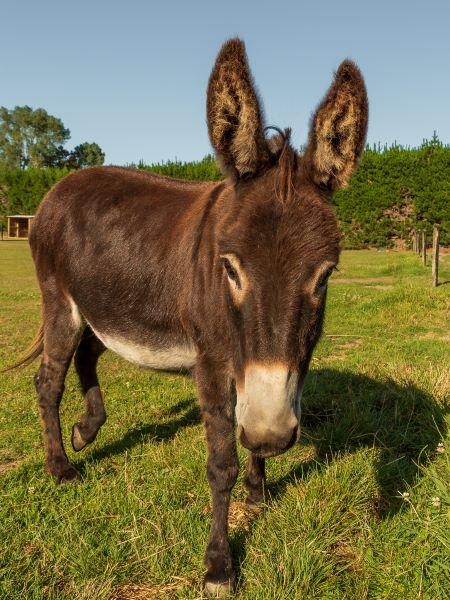 Barry Dench: Donkey