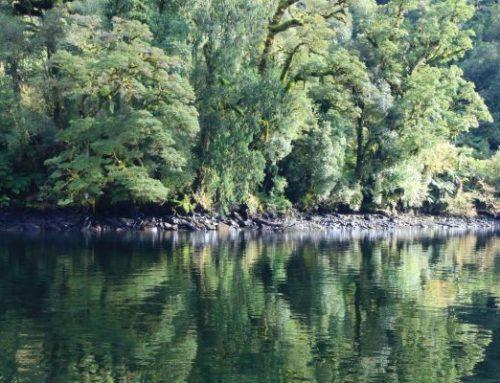 Fiordland 2022 Registrations