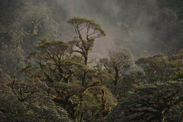 Maureen Pierre: Fiordland