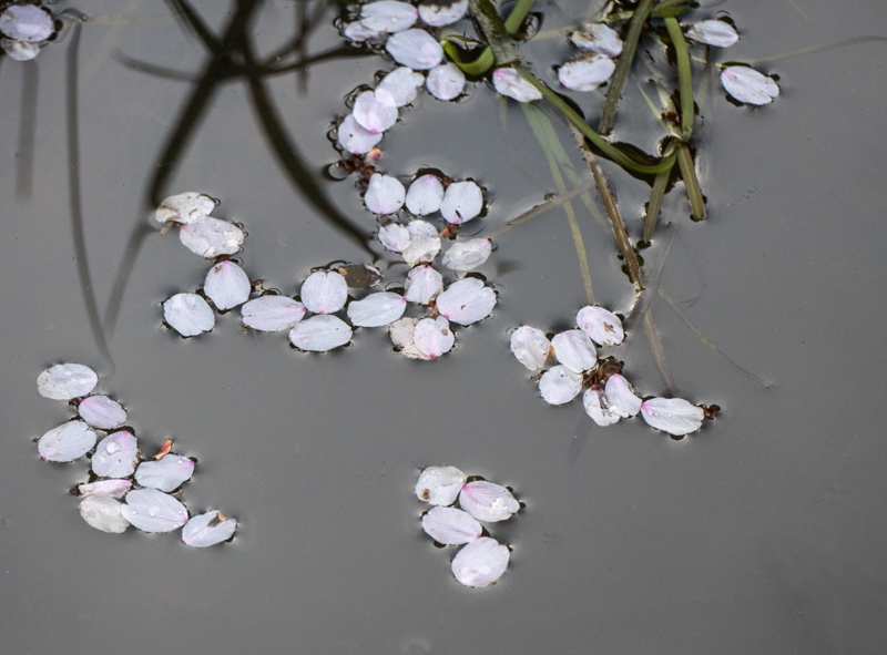 Caro: Petals